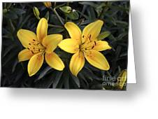 Pair Of Yellow Lilies Greeting Card