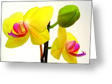 Pair Of Yellow Orchids Greeting Card
