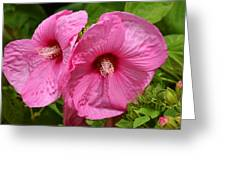 Paired In Pink Greeting Card