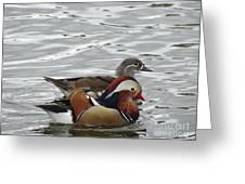 Paired Wood-ducks Greeting Card