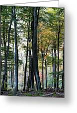 Palatine Forest Greeting Card