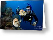 Palau Underwater Greeting Card