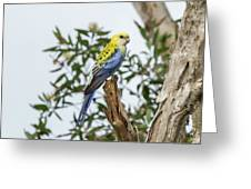 Pale-headed Rosella Greeting Card