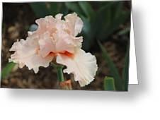 Pale Iris Greeting Card