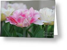 Pale Pink And White Parrot Tulips In A Garden Greeting Card