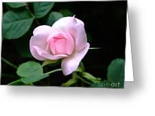 Pale Pink Rose Greeting Card