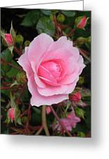 Pale Pink Rose Oregon Coast Greeting Card