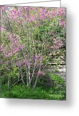 Pale Pink Spring Greeting Card