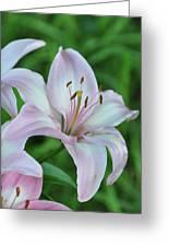 Pale Pink Stargazer Lillies II 2010 Greeting Card