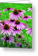 Pale Purple Coneflowers Greeting Card