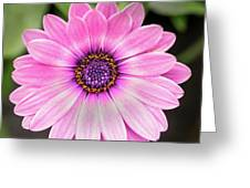 Pale Purple Flower Greeting Card