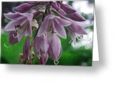 Pale Purple Starbursts Greeting Card
