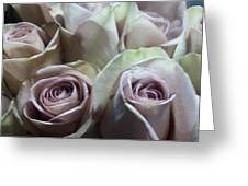 Pale Roses Greeting Card