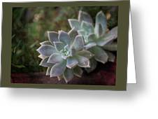 Pale Succulent On Artistic Background, Macro Greeting Card