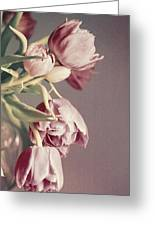 Pale Tulips Greeting Card