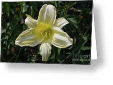 Pale Yellow Flowering Lily Blossom In A Garden Greeting Card