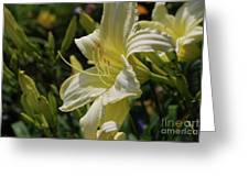 Pale Yellow Lily In A Garden Of Daylilies Greeting Card