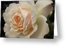 Pale Yellow Rose After The Rain - Glow Greeting Card