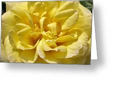 Pale Yellow Rose Greeting Card