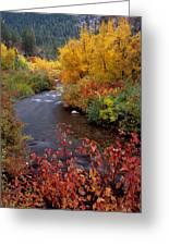Palisades Creek Canyon Autumn Greeting Card