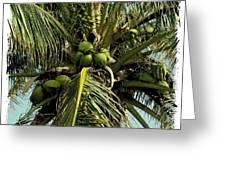 Palm 1 Greeting Card