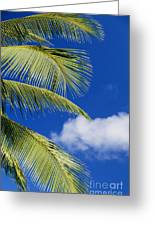 Palm Abstract Greeting Card