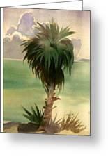 Palm At Horseshoe Cove Greeting Card
