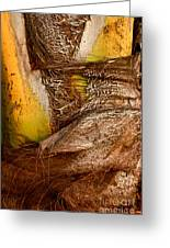 Palm Bark Greeting Card