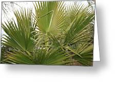 Palm Bush Greeting Card