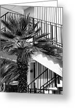 Palm Chevron Palm Springs Greeting Card