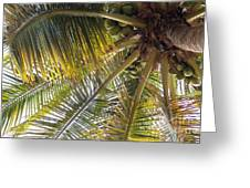 Palm Collection - Coconuts Are Fine Greeting Card