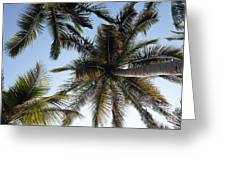 Palm Collection - Standing Tall Greeting Card