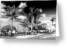 Palm Days In Punta Cana Greeting Card