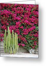 Palm Desert Blooms Greeting Card