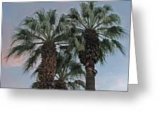 Palm Desert Palms  Greeting Card