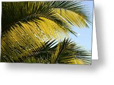 Palm Detail Greeting Card