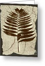 Palm Fossil Sandstone  Greeting Card