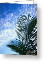 Palm Fronds And Clouds Greeting Card