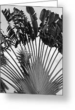 Palm Frons Greeting Card