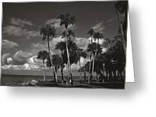 Palm Group In Florida Bw Greeting Card