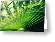 Palm House Branch Greeting Card