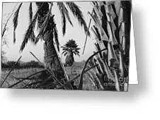 Palm In View Bw Horizontal Greeting Card