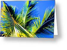 Palm Leaves Against The Sky 3 Ae  Greeting Card