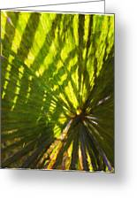 Palm Leaves And Morning Light Greeting Card