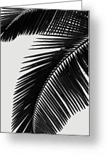 Palm Leaves Bw Greeting Card