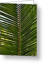 Palm Leaves Greeting Card