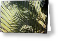 Palm On Palm Greeting Card