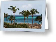 Palm On The Beach Greeting Card