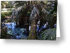 Palm Over A Boil Greeting Card