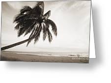 Palm Over Beach Greeting Card